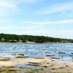 Seaweed_Farming,_Nusa_Lembongan,_Bali_(492092102)