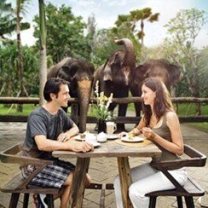 breakfast bali zoo
